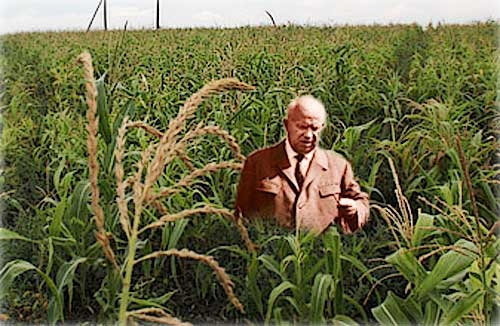 Выращивание кукурузы в ссср 68